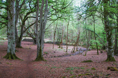 Portumna Forest Park1 451x300