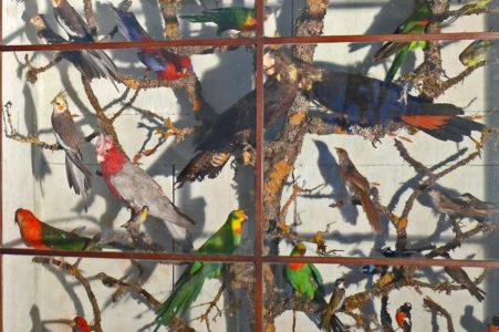 Birdies 451x300
