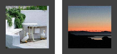 Ducks Sunset