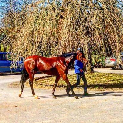 Curragh Horse 2 413x413