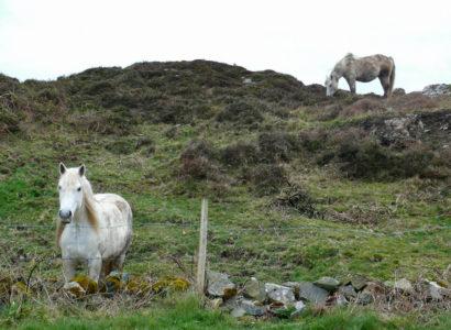 Horses 410x300