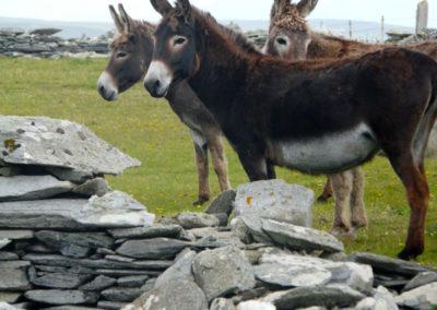 Donkeys 400x284
