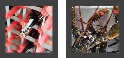 Winw Lobster 413x194