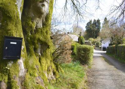 Driveway Tree 400x284