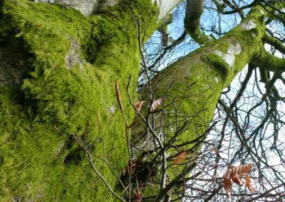 Tree 400x284