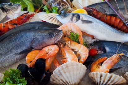 Seafood Food Healthy Sea 0