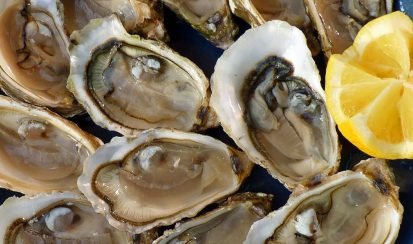 Oysters 413x244