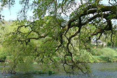 Tree 413x275