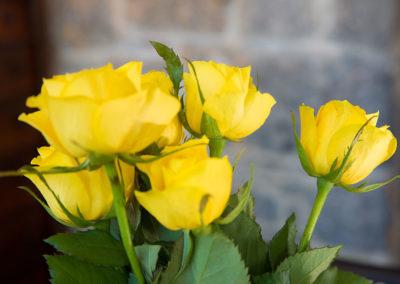 Roses 400x284