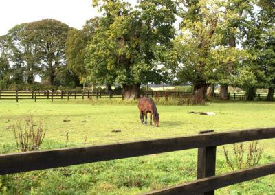 Horse Field 400x284