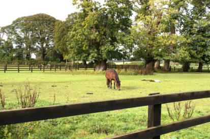 Horse Field 413x275