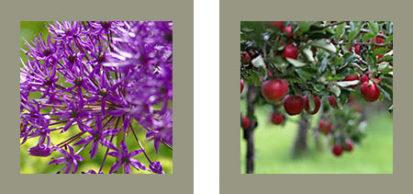 Flower Apples 413x194