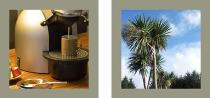 Coffee Tree 413x194