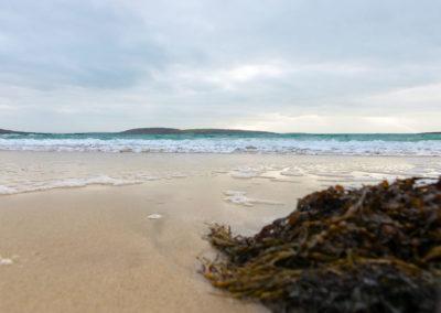 Seaweed 400x284