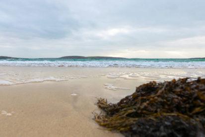 Seaweed 413x276