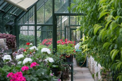 Greenhouse 2 413x275